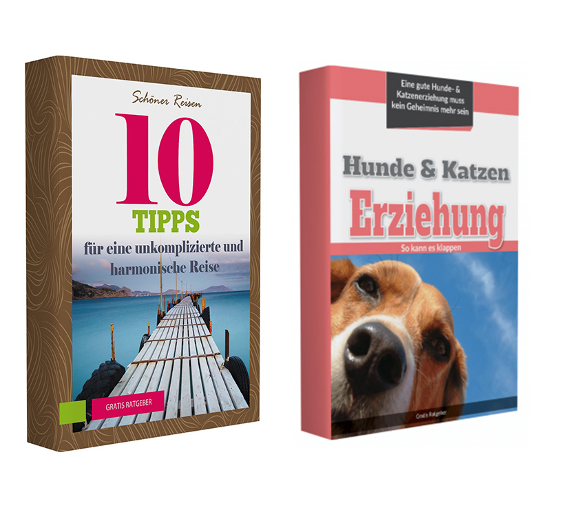 Hundeerziehung 10 Reisetipps